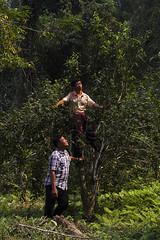 LoveTrees-06-Leavetea_0803