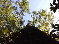 Up the pole and into the sky. (Justin Ajax) Tags: blue trees sky green nature outside spring alabama pole