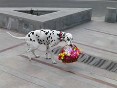 Good Morning from Yerevan ! (Alexanyan) Tags: park city dog flower capital armenia yerevan cascade armenian caucasia hayasdan