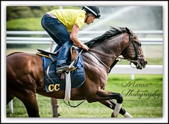 Summation Time (EASY GOER) Tags: park horses horse ny newyork sports race canon track belmont running racing 5d athletes races thoroughbred equine thoroughbreds markiii