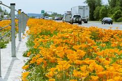 Orange median (OregonDOT) Tags: salem odot interstate5 goorange oregondot goorangeforsafety