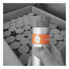 Our branded pot plants (GaryButterfield) Tags: orange plant color colour bright juice pot health human hr highlight resources wellbeing