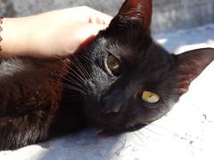 DSC00736 (Camila Monticelli) Tags: baby black cute cat eyes sony negro gato balck gatita gatito hx300