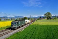 """Re 6/6 11646 """"SBB"""" Nottwil (Matthias Greinwald) Tags: see zug sbb cargo 66 re bundesbahn gterzug sempachersee sursee 11646 nottwil schweizerische sempacher"""