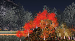 Forests at 21strom (zuza ritt) Tags: road autumn light summer terrain moon mountains fall leaves night leaf spring path hills foliage animated birch multicolor silverbirch virtualworld aspengrove digitalworld virtuallandscape notphotoshoped aspenforest whisperingwind windeffect aspenwoods digitallandscape opensim aspenlandscape opensimulator reshade colorseasons secondlifemeshtree secondlifemeshlandscape smoothwind