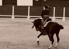 _DSC0567 (chris30300) Tags: france les cartagena corrida toro palavas rejon palavaslesflots flots languedocroussillonmidipyrnes languedocroussillonmidipyrn