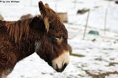 IMG_8804 (u.wittwer) Tags: park zoo schweiz switzerland tiere suisse tierpark heimat arth naturpark goldau widi