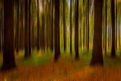Wald Abstrakt (Radek Lokos Fotografie) Tags: forest canon eos reisen outdoor l grn braun freiburg holz landschaft wald unscharf 1740 abstrakt mystisch 6d wlder radeklokosfotografie