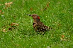 Flickr Central Park 4112 (jmwalsh_us) Tags: centralpark nikon300mmf4