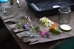 These are the finds from the participants using their intuition in the garden and edible hedgerow (Permaculture Association) Tags: wales gathering ecovillage permaculture 2016 lammas cyrmu paramaethu