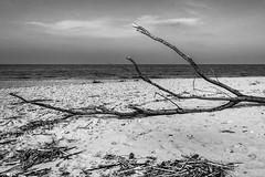 Poesia (SDB79) Tags: mare natura tronco paesaggio biancoenero legno molise petacciato