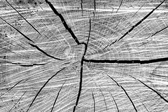 (greta.capaldo) Tags: nature love black white bw chinese idiom tree albero tronco trunk l4l