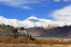 spituk monastery, ladakh (thupstan_rin) Tags: winter mountain snow landscape monastery himalaya ladakh mountainscape northindia indusriver tibetanbuddhism littletibet indusvalley incredibleindia spitukgompa thelastshangrila worldtrekker