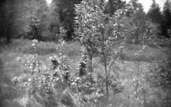 Untitled (Sketches_on_Film) Tags: camera 3 tree film nature forest photography photo holga 400 mm 35 ilford fomapan ilfosol