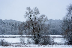 141227-_MG_4325-2 (matthiaskunz) Tags: winter snow tree landscape tbingen ammertal