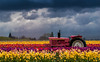A Pink John Deere Tractor (cooler than h2o) Tags: tulips tractor pink johndeere storm clouds flowers woodenshoetulipfields woodburn oregon landscape