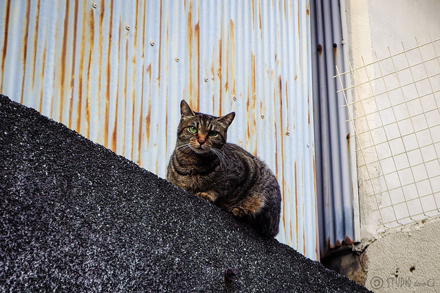 Today's Cat@2015-05-19