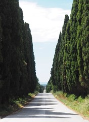 Bolgheri (Bardazzi Luca) Tags: cipressi viale carducci livorno maremma castagneto san guido prospettiva road tree alberi poesia firenze luca bardazzi tuscany toskana toscana storica storia italy italie italia europe city desktop wallpapers image olympus em10 micro four thirds 43 fotografia internet picture photo flickr