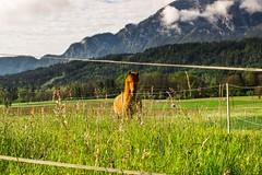Morning in Carinthia, Austria (fotoalex757) Tags: alex austria carinthia aleksander obir antonic aantonic aantonic73 fotoalex757