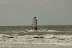 Belgian coast (Natali Antonovich) Tags: sea tree water sport seaside horizon lifestyle northsea relaxation oostende seashore seasideresort belgiancoast seaboard