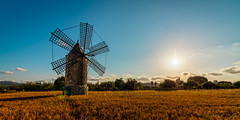 Before Sunset (Martin Zurek) Tags: world travel light vacation sky cloud sun holiday mill nature windmill beautiful field clouds zeiss canon landscape gold golden nice spain view wind viento clear molino espana spanish hour 5d es typical spanien ze illesbalears monturi 5ds distagont distagont2815 5dsr
