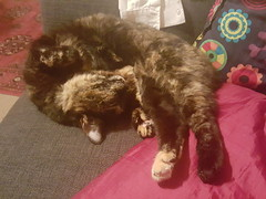 Cuteness (Brian Travelling Getty Contributor) Tags: animal feline pussycat