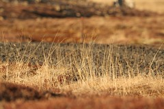Straws (rveig Ben) Tags: orange texture nature iceland spring straws