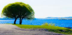 DSC_0835 (mihail.suontaus) Tags: blue tree green nature water finland nikon minimalism tamron 90mm d7100