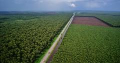 Paper Pulp Plantation Sumatra DSC_5188 (JKIESECKER) Tags: green nature paper sumatra indonesia aerialview aerialphotography paperpulp peopleandnature riausumatra paperpulpplantation naturalclimatesolutions