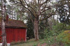 2016-05-18_04-57-07 (tommikv) Tags: abandoned forest forgotten abandonedhouse desolate
