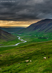 Sheep Sunset Along the Ring Road (Jonny Fay) Tags: road blue sunset orange sun mountain color green nature june sunrise landscape golden iceland nikon warm mood moody view sheep natural scenic dramatic ring solstice hour midnight vista drama d800 2014