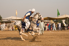 Tent pegging (imtiazchaudhry) Tags: horse sport lance popular rider equestrian gallop