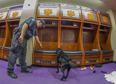 Doc sniffs Watsons locker (ken_scar) Tags: bombsniffingdog servicedog clemsonuniversity policedog dog police policeofficer campuspolice deathvalley memorialstadium southcarolina kenscar