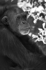 Monkey (sophiehep) Tags: monkey primate bioparc