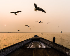 Flight | Varanasi,India (vjisin) Tags: travel light orange sunlight seagulls india bird heritage water river boats dawn boat nikon asia outdoor seagull varanasi serene hindu hinduism ganga ganges ghats kasi travelphotography incredibleindia