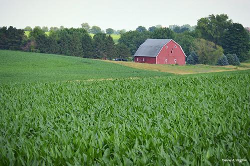 Ogle County, Illinois.   DSC_7221[1]