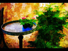 three small roses in the evening sun (j.p.yef) Tags: flowers roses wall garden table digitalart yef peterfey jpyef