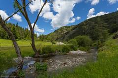 IMG_0669-228 (Martin1104) Tags: fotografie natuur bergen landschap vlinders yagodina snp bulgarije natuurfotografie natuurreis