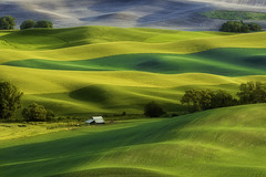 Palouse ,WA (3dRabbit) Tags: palouse wa farm wheat field color ground colorful spring house lone tree sungjinahn canon 135mm nature landscape green outdoor glass grass grassland plain plant