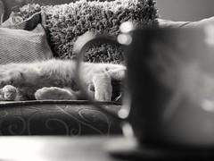 Earl Grey matine. (von8itchfisk) Tags: earlgrey tea teacup afternoontea cat pussy gingercat ginger gingertom gingerminge blackandwhite monochrome silver battisford vonbitchfisk matine