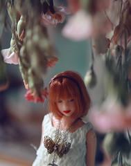 momoko (k07doll) Tags: cute bigeyes doll sweet blythe custom cubby blythedoll customblythe blythecustom k07 k07doll