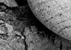 Take The Rough With The Smooth (Explored 26/7/16) (fimb64) Tags: macro macromondays macromondaysopposites opposites blackwhite sonya500 sony paulfowler fimb64 texture