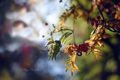 - (-LilyBeth) Tags: light luce nature natura nikon d3000 50mm dof depthoffield wonderfulworld outside summer bokeh