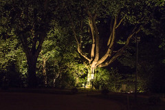 Serralves  noite - EXPLORE Sep 5, 2016 #306 (Francisco (PortoPortugal)) Tags: 1722016 20160723fpbo3452 luz light noite night serralves parquedeserralves jardinsdeserralves porto portugal portografiaassociaofotogrficadoporto franciscooliveira rvores trees