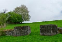Bunker Unterendingen, Aargau, Switzerland (W-chlaus) Tags: schweiz switzerland tank suisse fort swiss wwii bunker ww2 trap panzersperre sperre surb bunkerfreunde