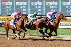 Santa Anita Derby 2015 (kimpossible pics) Tags: horse racetrack jockey horseracing dortmund racehorse thoroughbred arcadia equine santaanita santaanitaracetrack martingarcia bobbaffert santaanitaderby kaleemshah