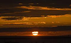Sunset 21130 MZGN