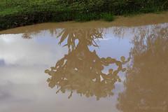Nopal (marthahari) Tags: naturaleza mxico ro agua explore cielo reflejo opuntia mx nopal cactacae edomex cctus tepetlaoxtoc