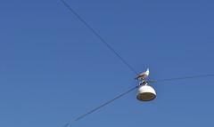 bird looking down at his empire (ros-marie) Tags: fågel uppat fotosondag fs150426