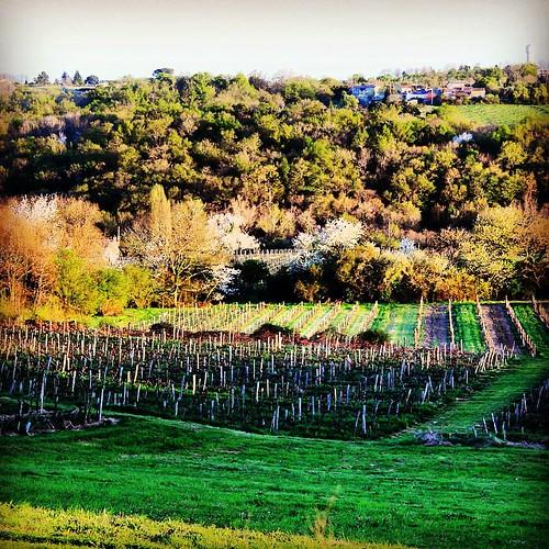 #spring #magnifique #magnifiquefrance #gironde #France #green #nature #instagood #insta #instalike #igersgironde #vignes #vignoble #vine #tree #tagsforlikes #beautifulfrance #beautiful